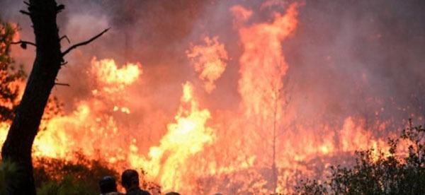 Ξεπερνούν τα 36 εκατ. ευρώ οι αποζημιώσεις για τις πυρκαγιές της Αττικής